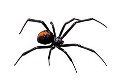 Spider Control Tucson